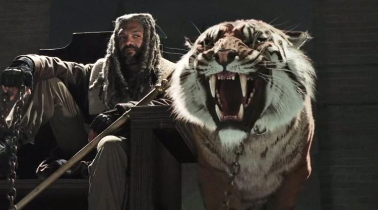 A picture of Shiva the Tiger from The Walking Dead.